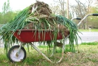 red wheel barrow full of palm tree trimmed branches