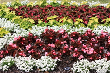colorful flower bed of perennial and annual flowers